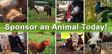 Sponsor an Animal Today!